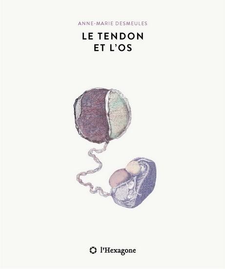 Roman : Le tendon et l'os